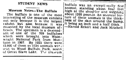 Museum Notes - THE BUFFALO!